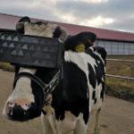 牛にはVR。オイラにはお客様。